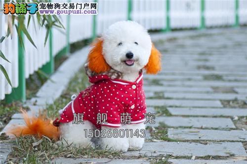 浙江便宜出售比熊可爱小犬带证书全国发货