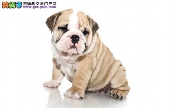 患皮肤病的沙皮狗能不能经常洗澡