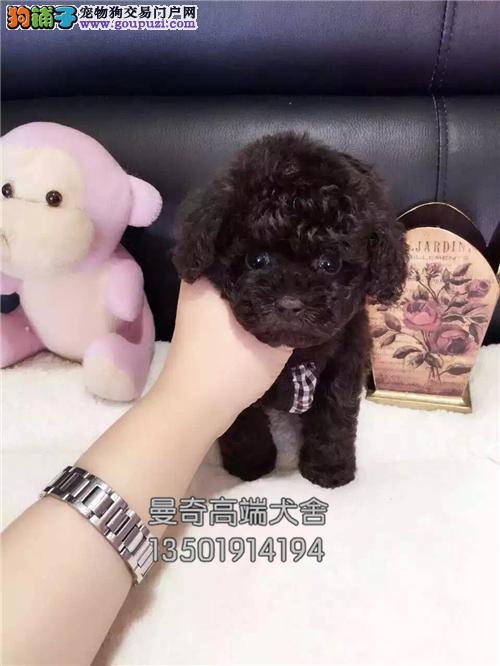 广东泰迪健康聪明小熊保健康全国发货