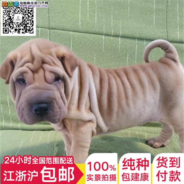 专业出售 大型犬中型犬 小型犬全国包邮