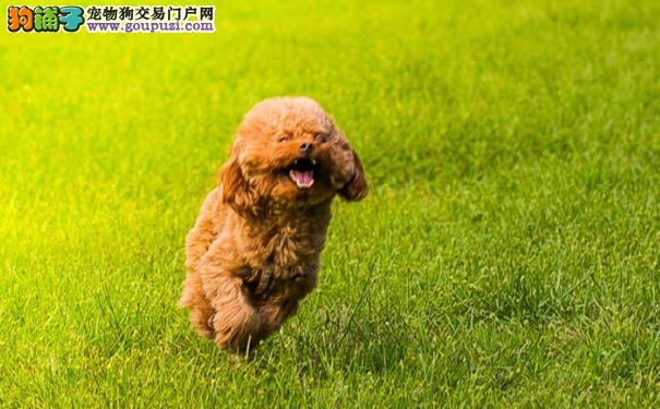 最受欢迎的八大宠物狗狗5