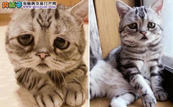 猫咪无辜大眼让人难直视!可爱模样背后有辛酸