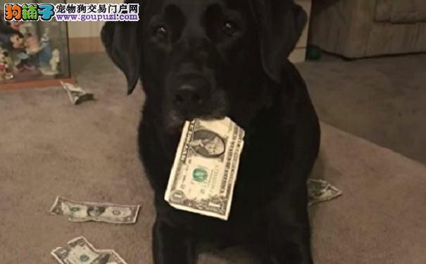 狗狗超爱从钱包偷钞票 为要回钱她想出妙招