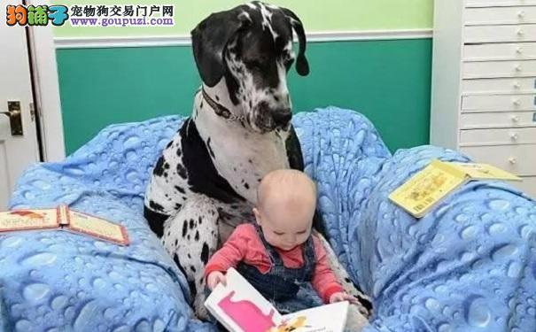 家里有狗狗的宝宝其实是最幸福的