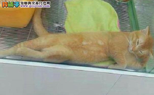 网友在宠物店里逛 却看到了只桀骜不驯的猫咪