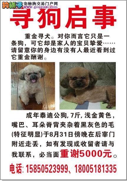 南京市玄武区后宰门酬谢五千元寻找泰迪