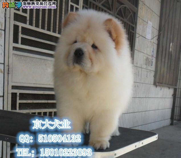 北京松狮幼犬出售 松狮幼犬 纯黑色 奶油色