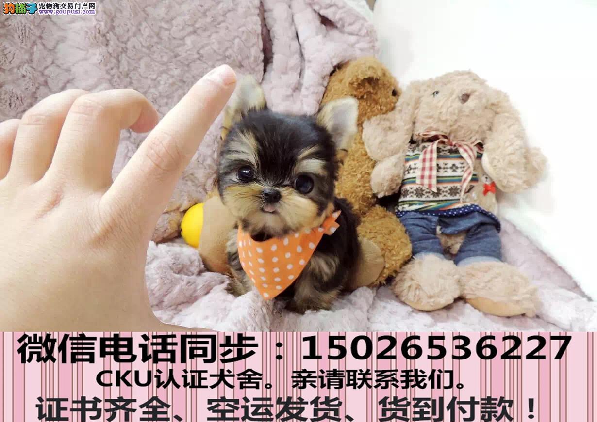 全国送货上门 约克夏幼犬保健康保纯种签售后协议