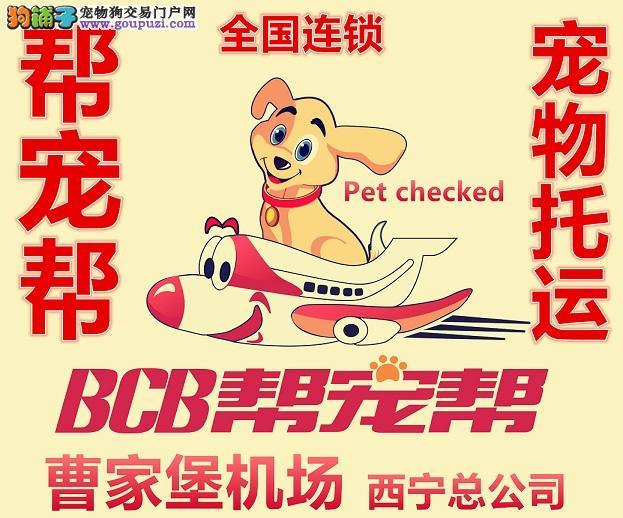 宠物托运全国国际找十年宠物托运公司帮宠帮李强