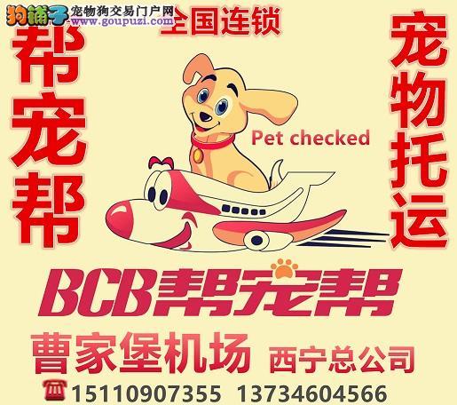 宠物托运全国国际国内航空宠物托运找帮宠帮宠物托运