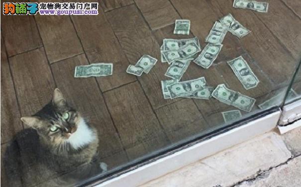会夹钞票的办公室猫咪 已捐善款百余美元