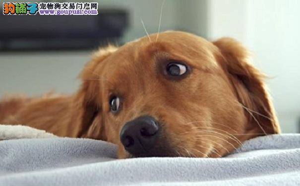 领养狗狗夜晚有个怪习惯 主人得知真相落泪