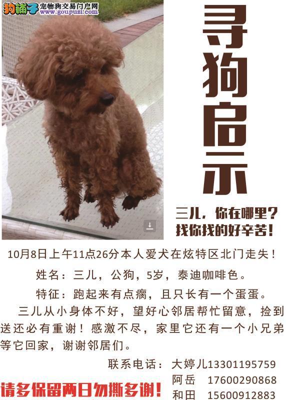 北京朝阳区石佛营东里炫特区北门寻找咖啡色泰迪