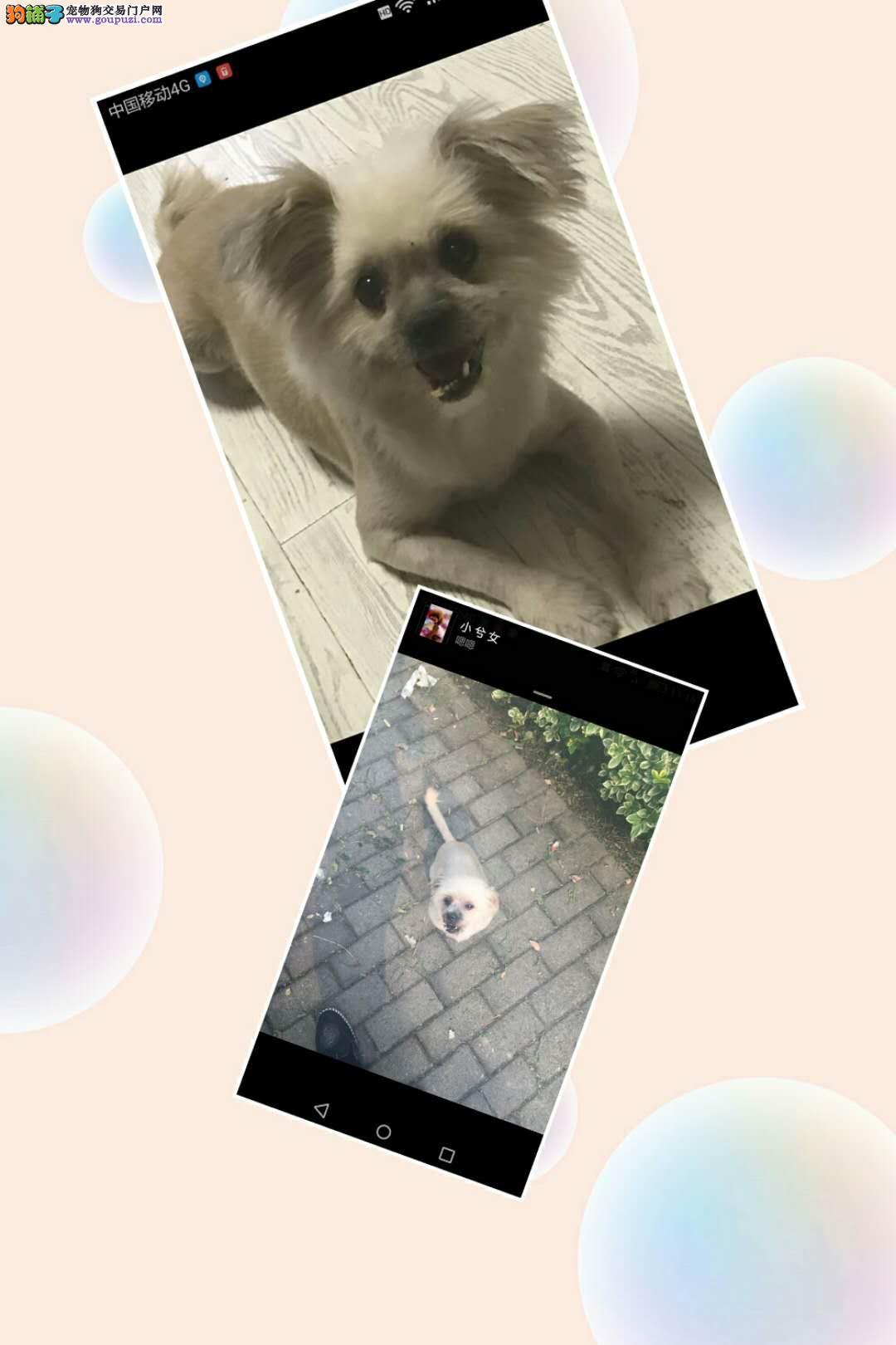 上海宝山区友谊路宝钢三村门口酬谢五千元寻找狗狗