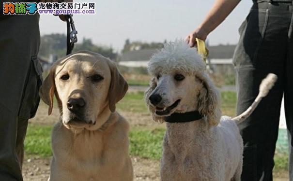 研究证明养狗益处 远离心血管病变与死亡