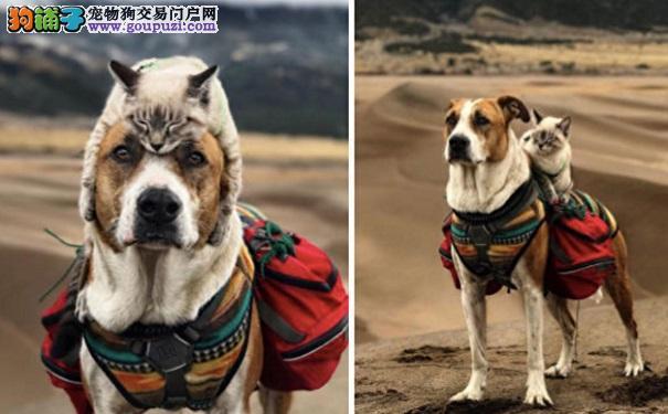 小猫无法接受与大狗分离 接受训练与大狗上山下海冒险