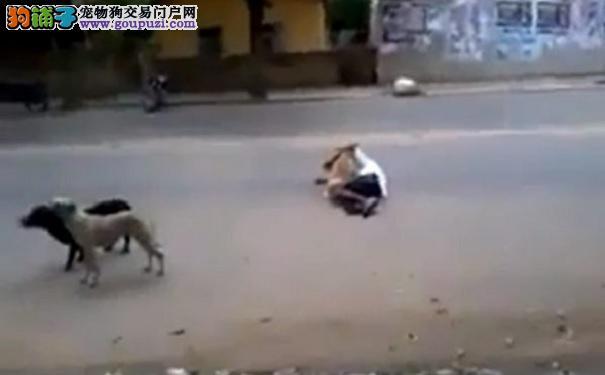 男子烂醉倒地 狗狗用身体守护主人不让汽车撞