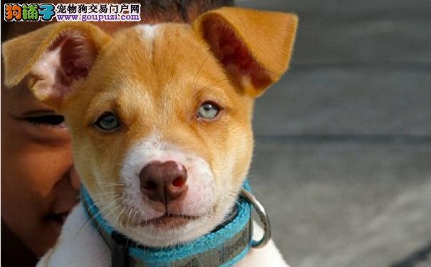 人们告诉男孩 狗狗已经去了天堂 他的回答感动了大家