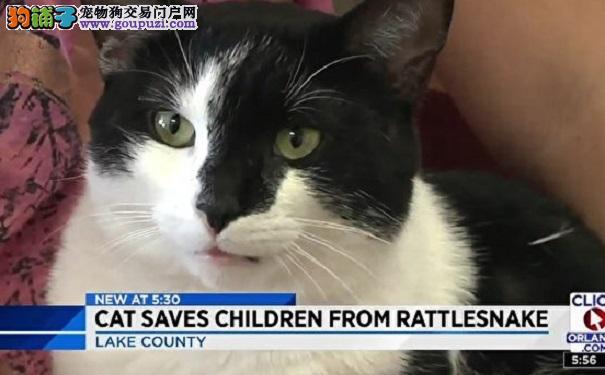 美国佛州小猫赶走响尾蛇 勇救小主人