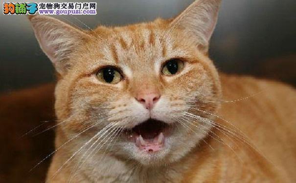 猫咪总爱跟你顶嘴 你也许不知道的5种原因