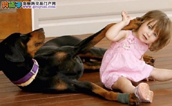 狗叼着尿布抛出女婴 妈妈走近才知它救了宝宝命
