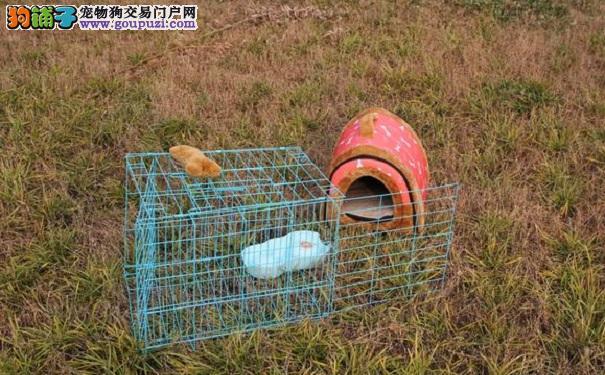 郑州现爱心小窝 流浪猫狗不用在发动机下取暖了