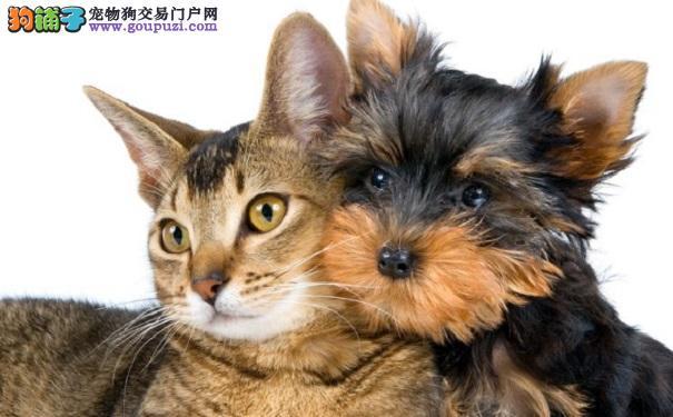 猫和狗究竟谁更聪明?科学家终于有答案了