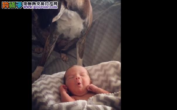 宝宝突然哭闹不止 狗狗一个动作让他安心入睡好暖心