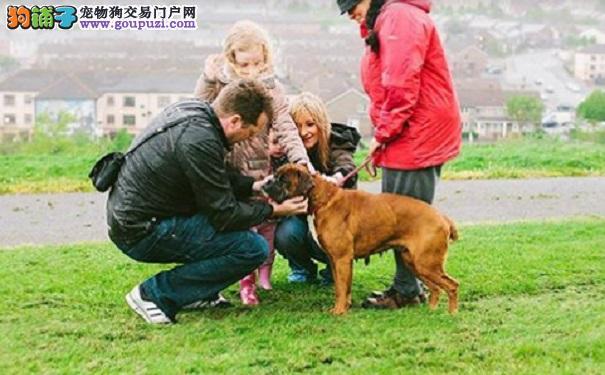 6岁女孩发现狗狗藏身洞穴 营救后得知狗狗经历落泪