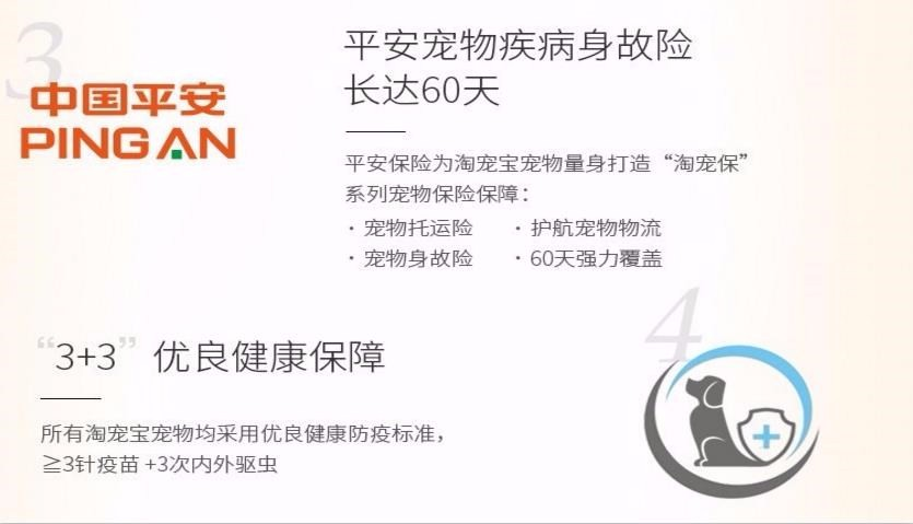 低价热销泰迪犬,金牌店铺价位最低,提供养护指导