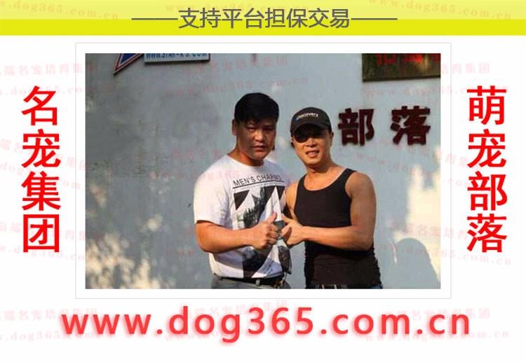 长沙繁殖基地出售多种颜色的法国斗牛犬微信咨询视频看狗