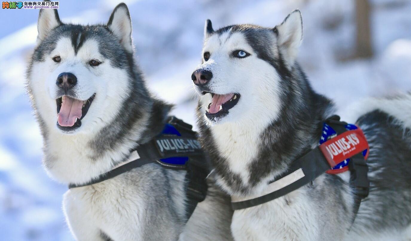 养狗要注意它的健康与生活环境