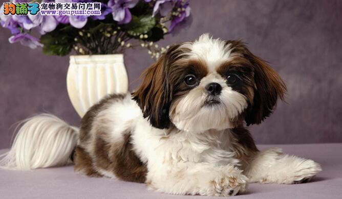 怎样训练狗狗与你和谐拍照