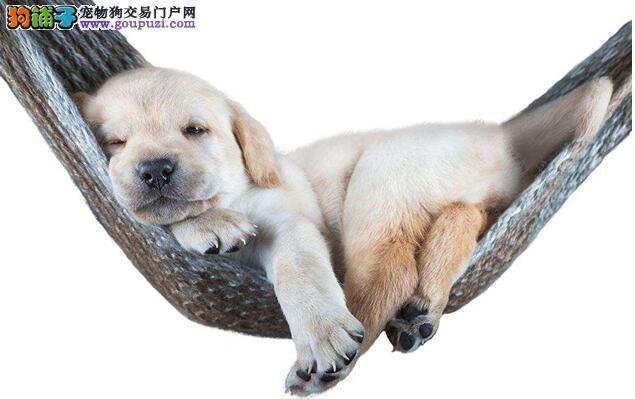 怎么和狗狗亲如手足