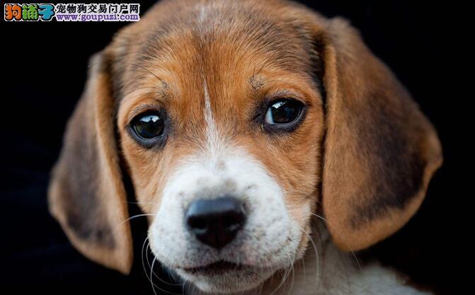 """怎样防止狗狗在家擅自""""搞破坏"""""""