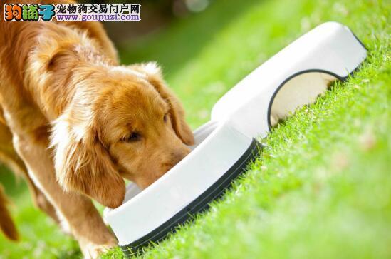 如何正确调理狗狗肠胃