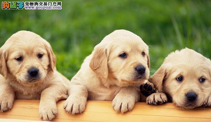 狗狗为什么突然拉稀呕吐