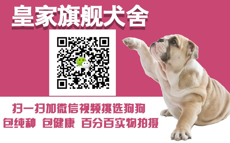 温州自家繁殖的泰迪犬找新主人 价格可商量欲购从速