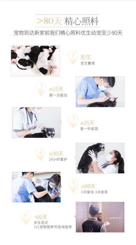 赤峰高品质柴犬幼犬出售三针做齐质保健康签协议送用品