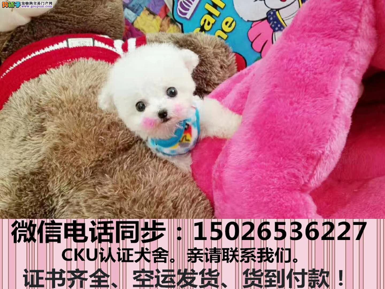 出售纯种泰迪犬幼犬全国发货签订协议1