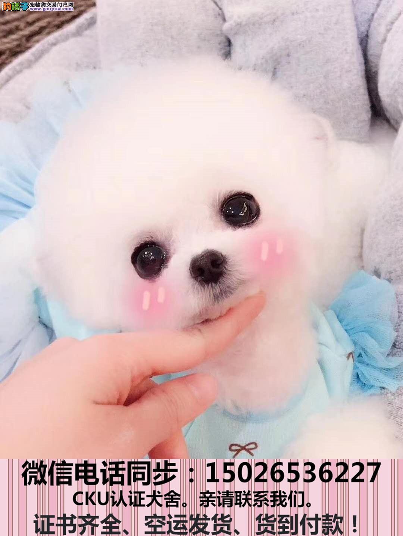 出售纯种泰迪犬幼犬全国发货签订协议2