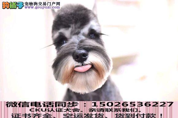 实拍现货视频一雪纳瑞幼犬保健康保纯种签售后协议