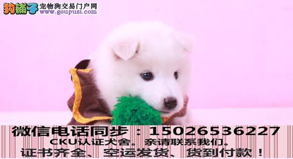 实拍现货视频一银狐幼犬保健康保纯种签售后协议