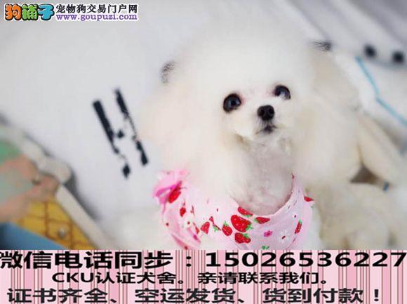 实拍现货视频一贵宾幼犬保健康保纯种签售后协议