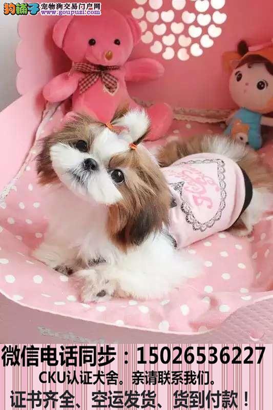 全国送货上门 西施幼犬保健康保纯种签售后协议