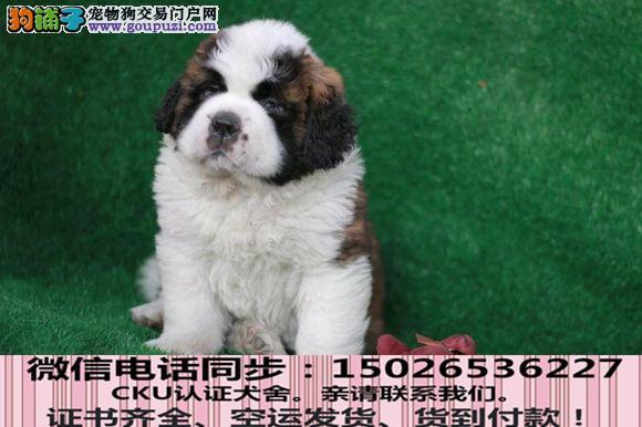 全国送货上门 圣伯纳幼犬保健康保纯种签售后协议2