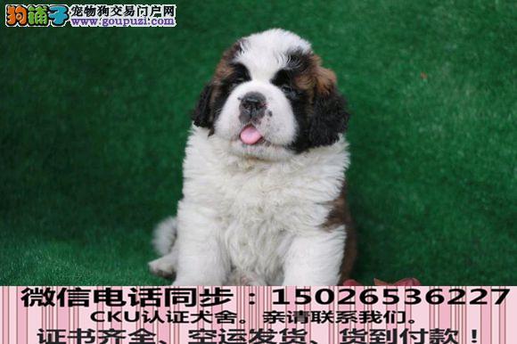 全国送货上门 圣伯纳幼犬保健康保纯种签售后协议1