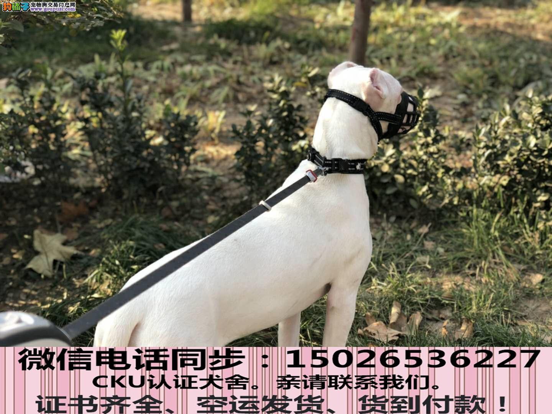 全国送货上门 杜高幼犬保健康保纯种签售后协议