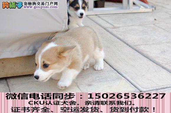 全国送货上门 柯基幼犬保健康保纯种签售后协议