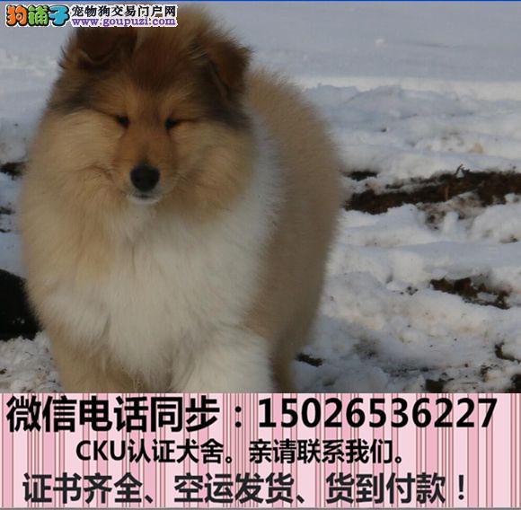 全国送货上门 苏牧幼犬保健康保纯种签售后协议